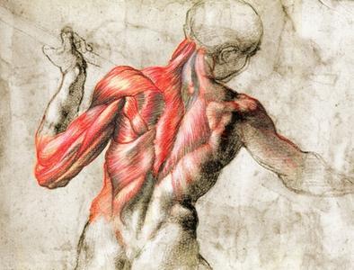 27774168_corso-di-fondamenti-di-anatomia-fisiologia-umana-0