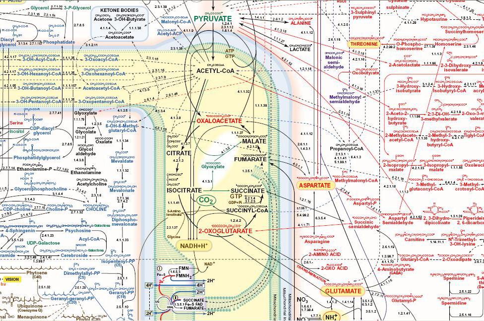 metabolism-excerpt